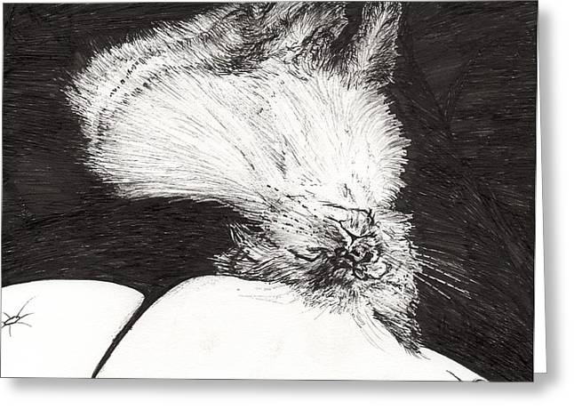 Cats Drawings Greeting Cards - Sleepy Belina Greeting Card by Vincent Alexander Booth