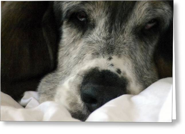 Basset Hound Greeting Cards Greeting Cards - sleepy Dog Greeting Card by Marysue Ryan