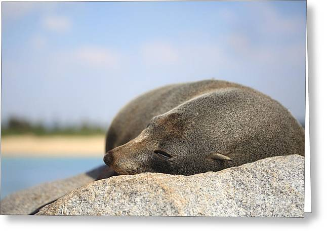 Lazing Greeting Cards - Sleepy Fur Seal Greeting Card by Leah-Anne Thompson