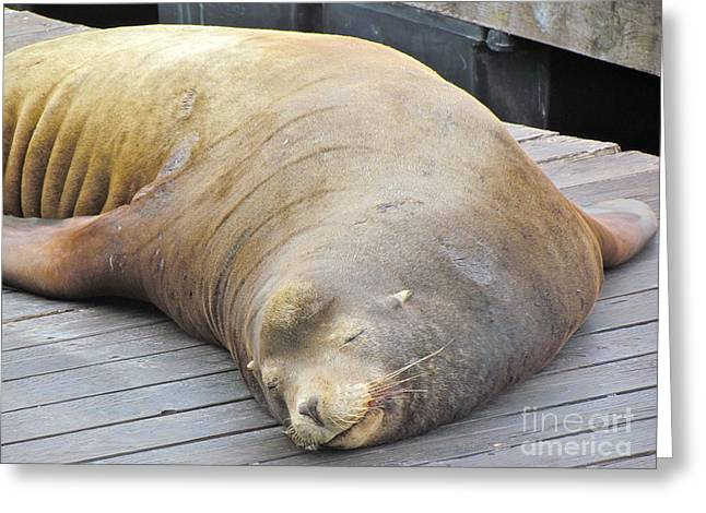 Recently Sold -  - Sea Lions Greeting Cards - Sleepy Sea Lion Greeting Card by Beth Saffer