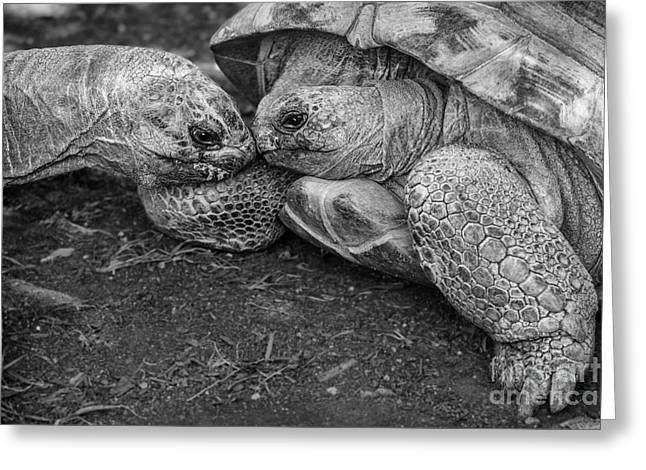 Large Scale Greeting Cards - Slow Kiss Greeting Card by Jamie Pham