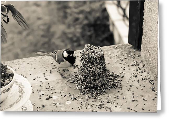 Feeding Birds Photographs Greeting Cards - Small Birds Eating Greeting Card by Nomad Art And  Design
