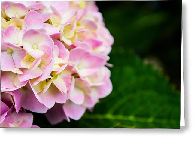 Pinks And Purple Petals Photographs Greeting Cards - Small Details Greeting Card by Shelby  Young