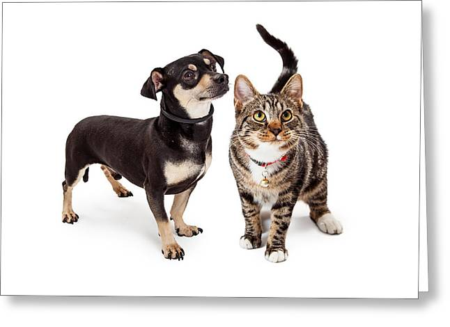 Pedigree Greeting Cards - Small Dog and Cat Looking Up Together Greeting Card by Susan  Schmitz