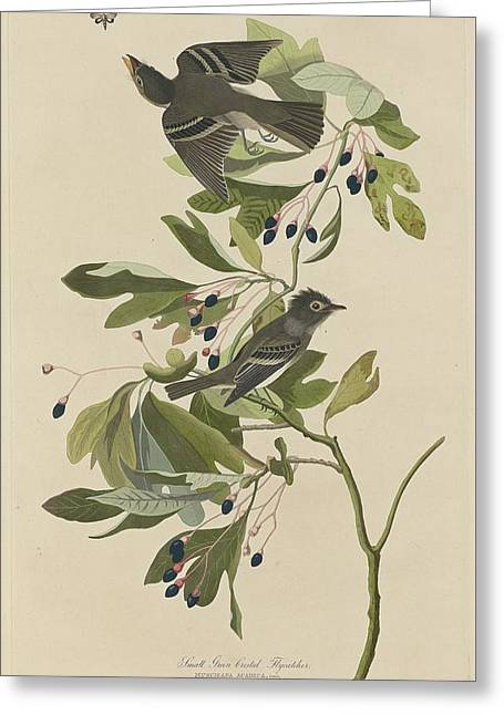Small Bird Greeting Cards - Small Green-Crested Flycatcher Greeting Card by John James Audubon