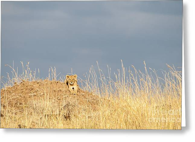 Recently Sold -  - Reserve Greeting Cards - Small Lion in a Big World Greeting Card by Paulette Sinclair