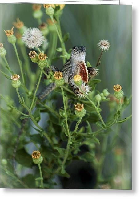 Surprise Greeting Cards - Small Lizard  Greeting Card by Debra Forand