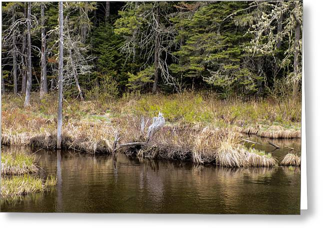Maine Landscape Greeting Cards - Small Marsh Greeting Card by William Tasker