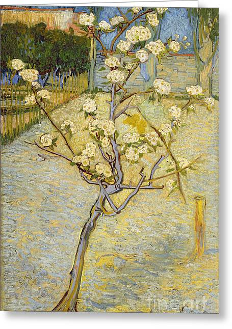Pear Tree Paintings Greeting Cards - Small pear tree in blossom Greeting Card by Van Gogh