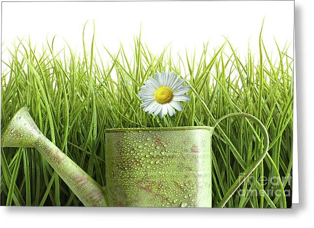 Small Watering Can With Tall Grass Against White Greeting Card by Sandra Cunningham