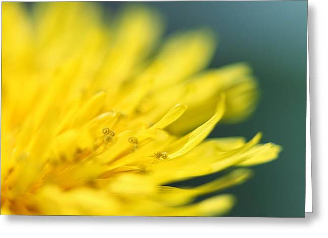 Yellow Flowers Framed Prints Greeting Cards - Small World Greeting Card by Amy Tyler