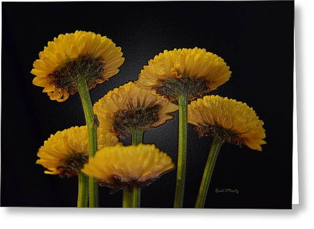 Floral Digital Art Greeting Cards - Small Yellow Mums Greeting Card by Sandi OReilly