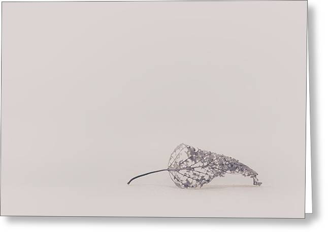 Smallest Leaf Greeting Card by Scott Norris