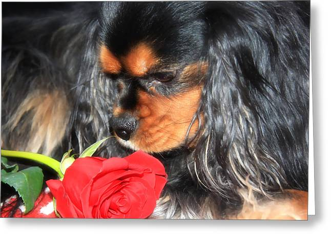 Love The Animal Greeting Cards - Smelling The Red Rose Greeting Card by Daphne Sampson