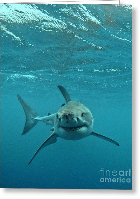 Smiley Shark Greeting Card by Crystal Beckmann
