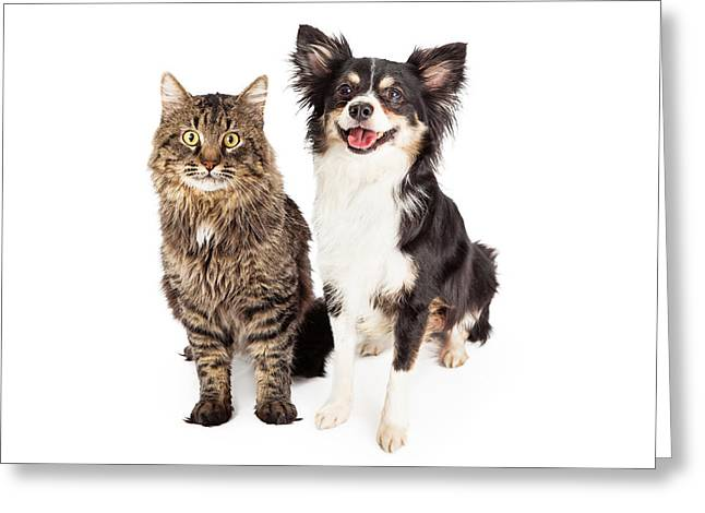Obedience Greeting Cards - Smiling Chihuahua Mixed Breed Dog and Cat Together Greeting Card by Susan  Schmitz