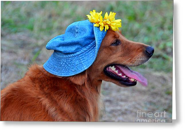 Mahogany Red Greeting Cards - Smiling Golden Retriever in Hat Greeting Card by Catherine Sherman
