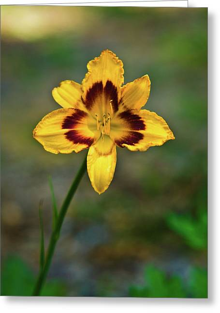 Festivities Greeting Cards - Smiling Yellow Lilly Greeting Card by Douglas Barnett