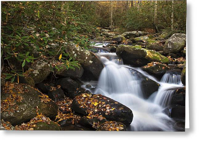 Rapids Greeting Cards - Smokies Stream in Autumn Greeting Card by Andrew Soundarajan