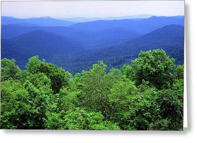 Tree Lines Greeting Cards - Smoky Mountain National Park Greeting Card by Panoramic Images