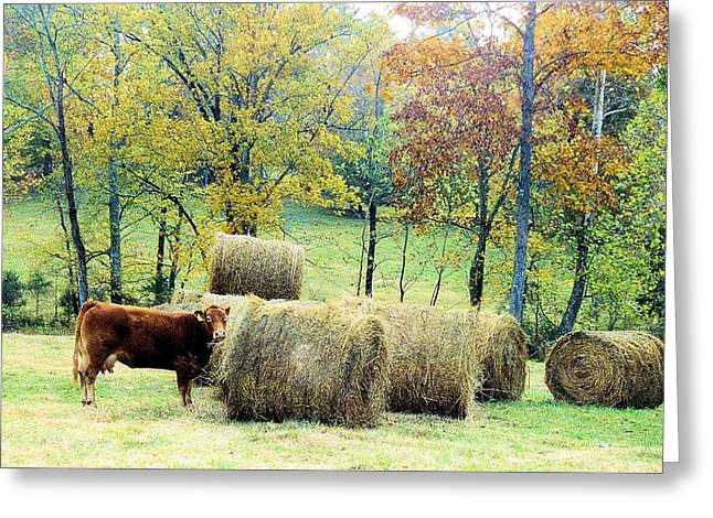 Tennessee Hay Bales Greeting Cards - Smorgasbord Greeting Card by Jan Amiss Photography