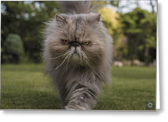 Pictures Of Cats Greeting Cards - Snaefels looking cross Greeting Card by Anatole Beams