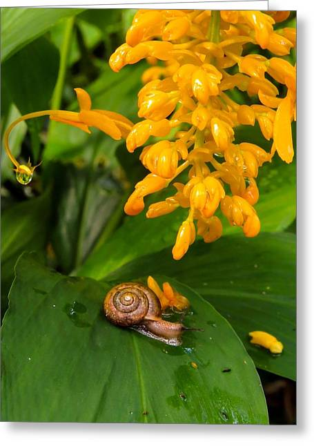 Print On Canvas Greeting Cards - Snail on plant Greeting Card by Zina Stromberg