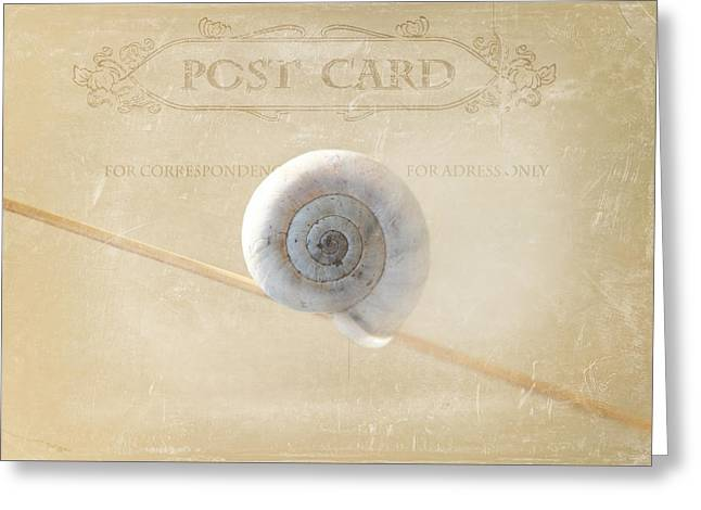 Texting Greeting Cards - Snail Post Greeting Card by Heike Hultsch