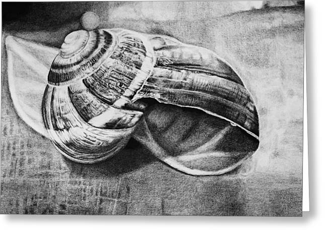 Photorealism Greeting Cards - Snail Shell  Greeting Card by Jon Lin