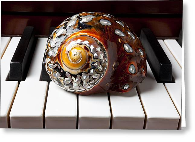 Keyboard Photographs Greeting Cards - Snail shell on keys Greeting Card by Garry Gay