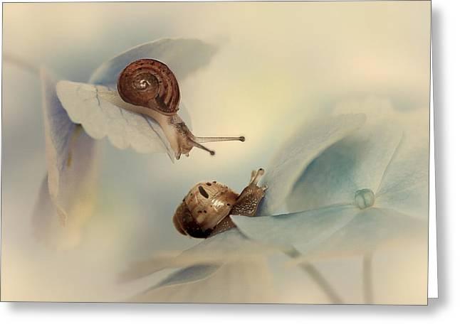 Macro Greeting Cards - Snails Greeting Card by Ellen Van Deelen