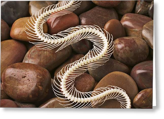 Snake skeleton  Greeting Card by Garry Gay