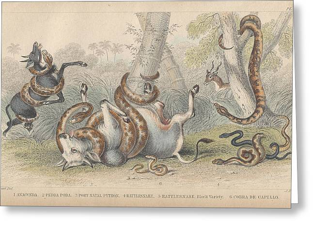 Lizard Illustration Greeting Cards - Snakes Greeting Card by Oliver Goldsmith