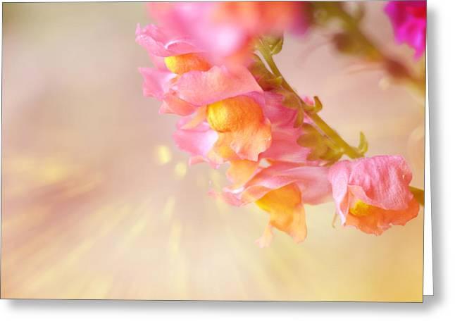 Snapdragons Greeting Cards - Snap Dragon Fire Greeting Card by Marcie  Adams