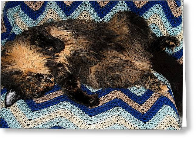 Tortie Greeting Cards - Snoozing Lucy Greeting Card by Nilla Haluska