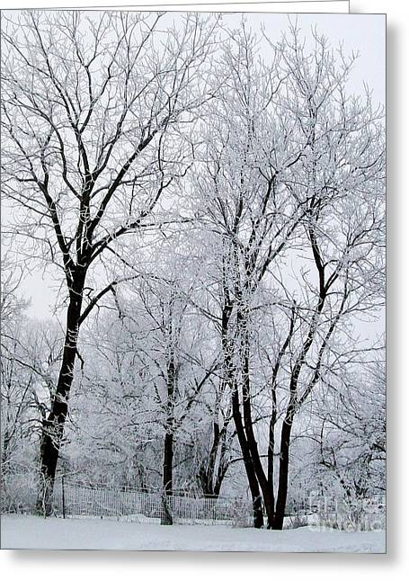 Winter Posters Greeting Cards - Snow And Ice Greeting Card by Marsha Heiken