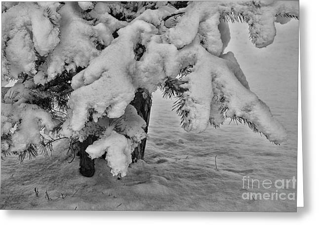 Snow And Tree Greeting Card by SK Pfphotography