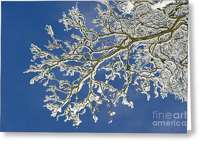 Wintry Photographs Greeting Cards - Snow Branch Greeting Card by Tim Gainey