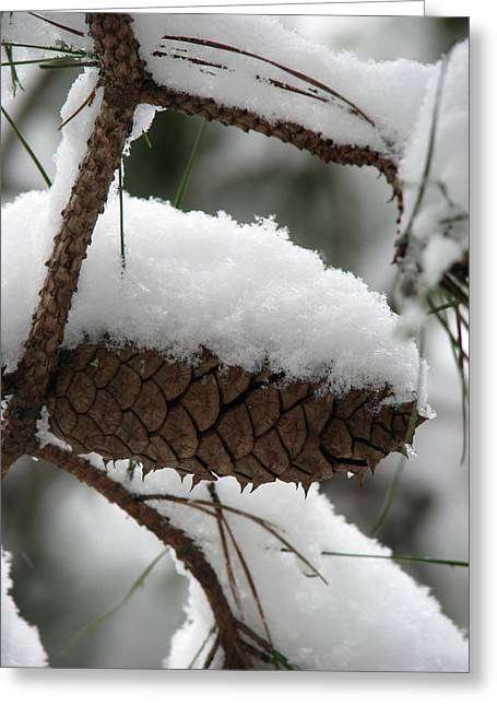Pine Cones Greeting Cards - Snow Cone Greeting Card by Staci-Jill Burnley