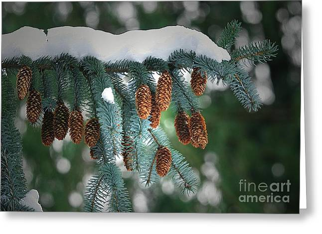 Snow Cones Greeting Card by Sharon  Talson