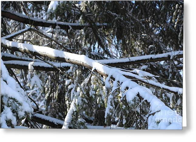 Snow Tree Prints Greeting Cards - Snow Covered Evergreen Branches Greeting Card by Jari Hawk
