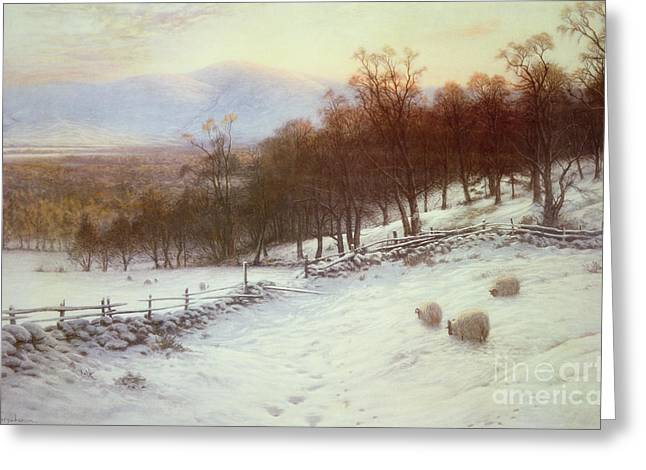 Grazing Snow Greeting Cards - Snow Covered Fields with Sheep Greeting Card by Joseph Farquharson