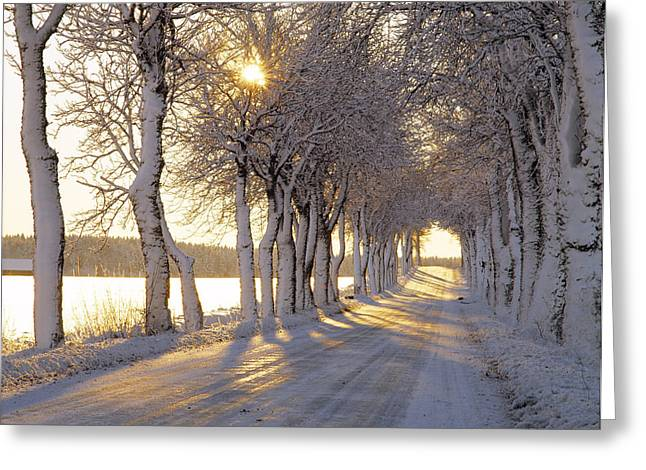 Tree Lines Greeting Cards - Snow Covered Road Greeting Card by Panoramic Images