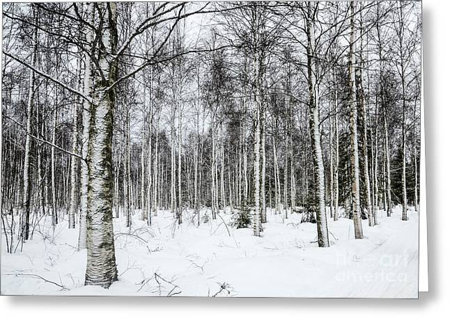 Snow-covered Landscape Greeting Cards - Snow Covered Trees Greeting Card by Amir Paz