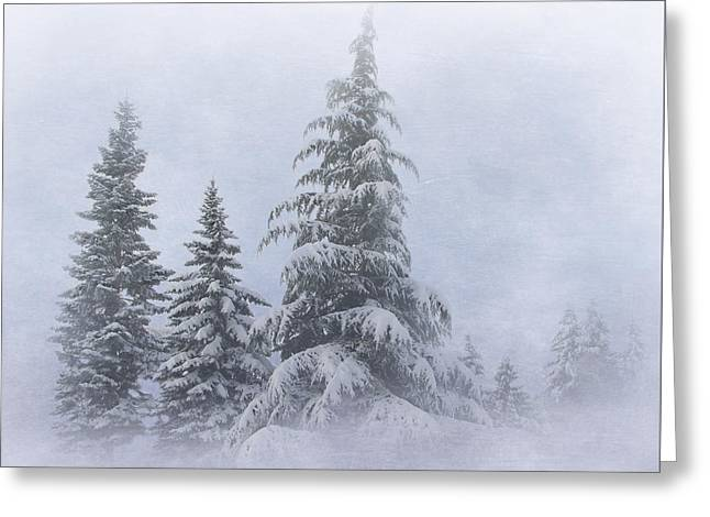 Snow Covered Trees Greeting Card by Angie Vogel