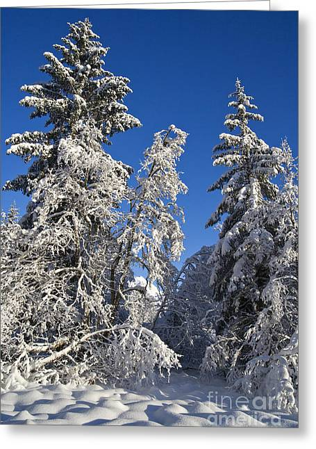 Life Line Greeting Cards - Snow Covered Trees Greeting Card by John Hyde - Printscapes