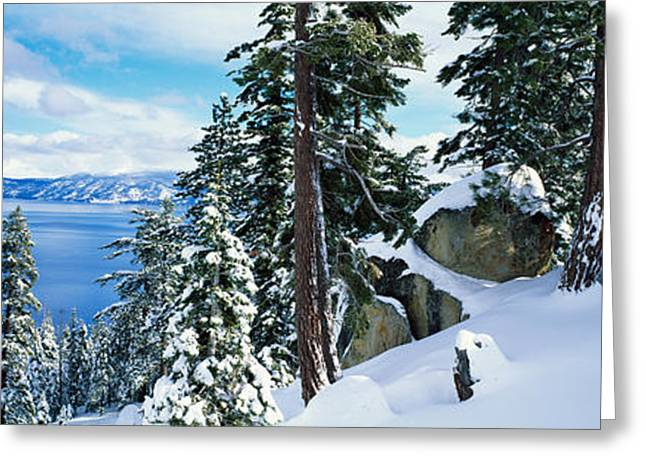 Pinaceae Greeting Cards - Snow Covered Trees On Mountainside Greeting Card by Panoramic Images