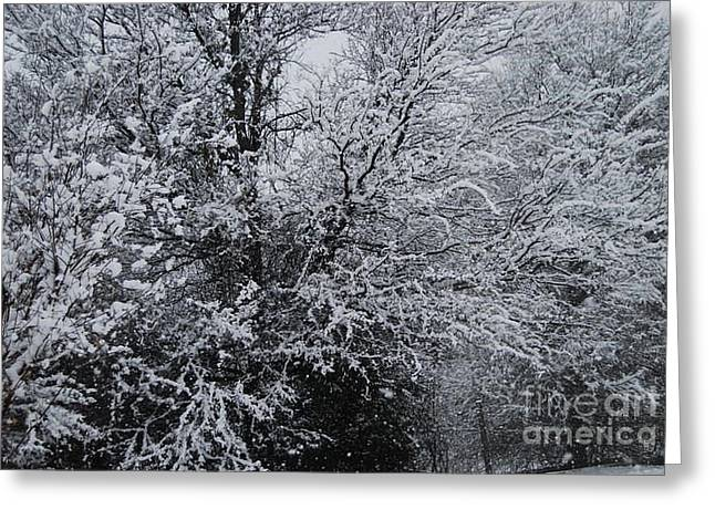 Snow Tree Prints Greeting Cards - Snow Covered Trees Greeting Card by Ruth  Housley
