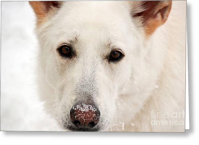 Snow Dog Greeting Card by Jill Hyland