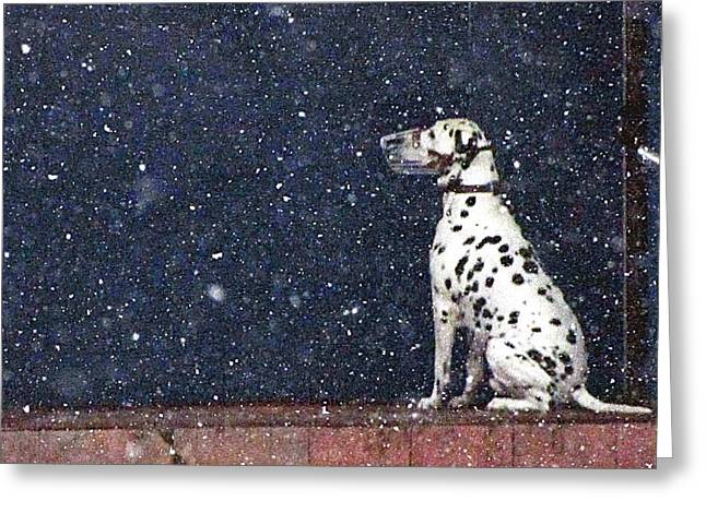 SNOW DOG Greeting Card by YURY BASHKIN